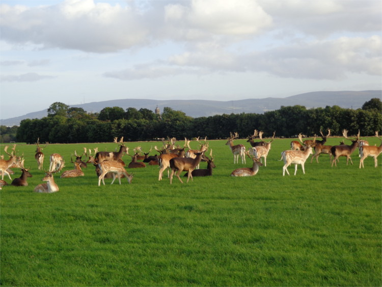 BAM: Connecting with Nature in the Phoenix Park – A Guided Bike Tour